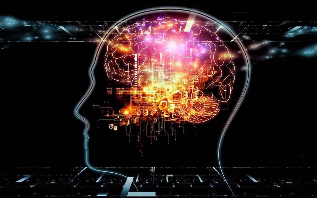 Le fonctionnement du cerveau humain